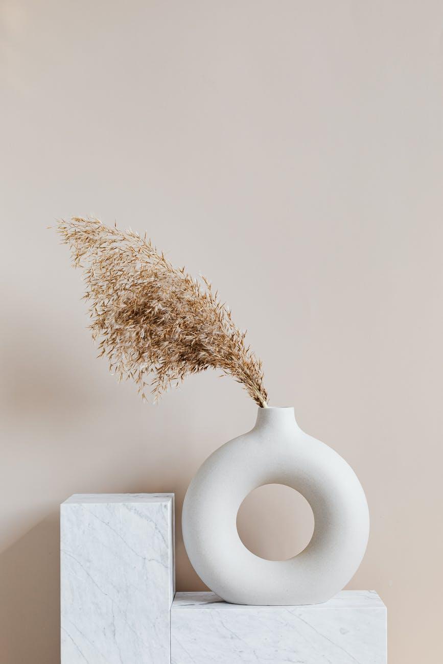 brown plant on white ceramic vase